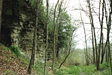 Findlay Township Forest